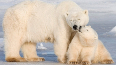 Mama and Baby polar bears.
