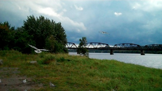 Bridge, clouds, birds, river, grass, trees