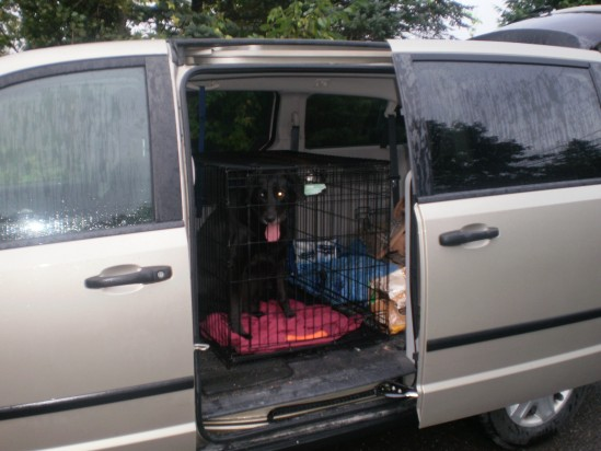 Dog in a crate in a van whose seats were hiding.