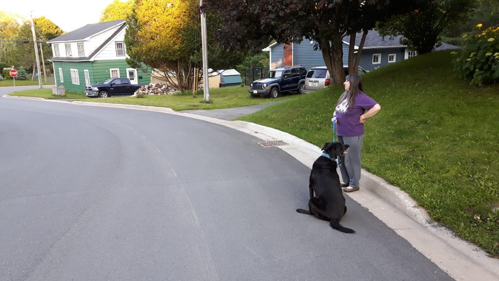 Dog sitting in the road. Cathi giving up trying to motivate him.