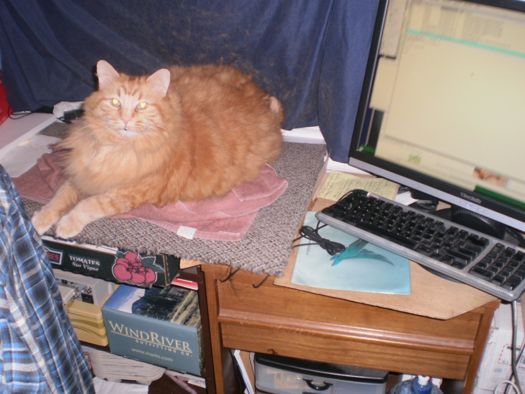 Orange cat stationing himself between me and the computer.