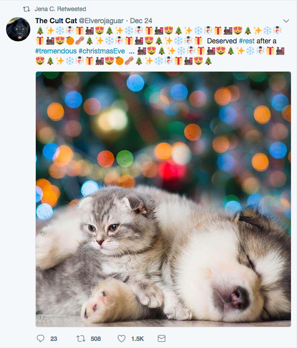 Dog. wth his arm around a cat, snoozing with Holiday lights in the background.